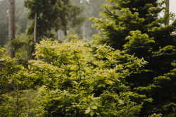 zeit-genusswerkstatt-wald-andreaheinsohnphotography-altesland-12