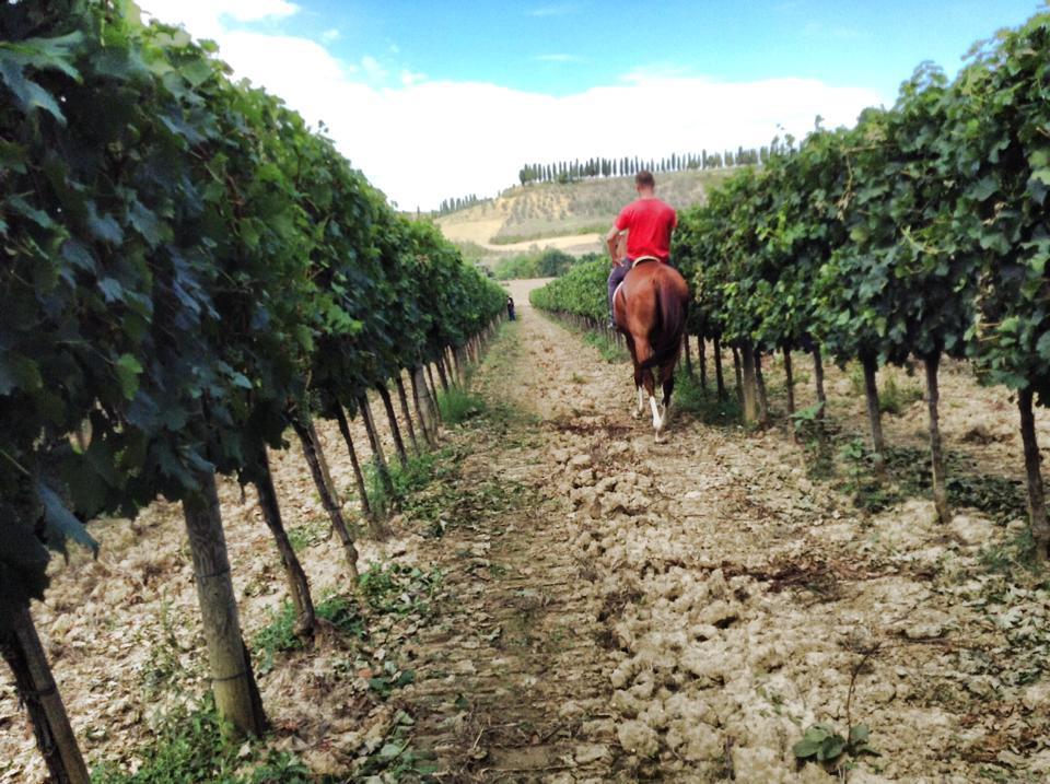 horsebackmontalcino.jpg