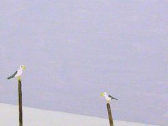 Seagulls on trees