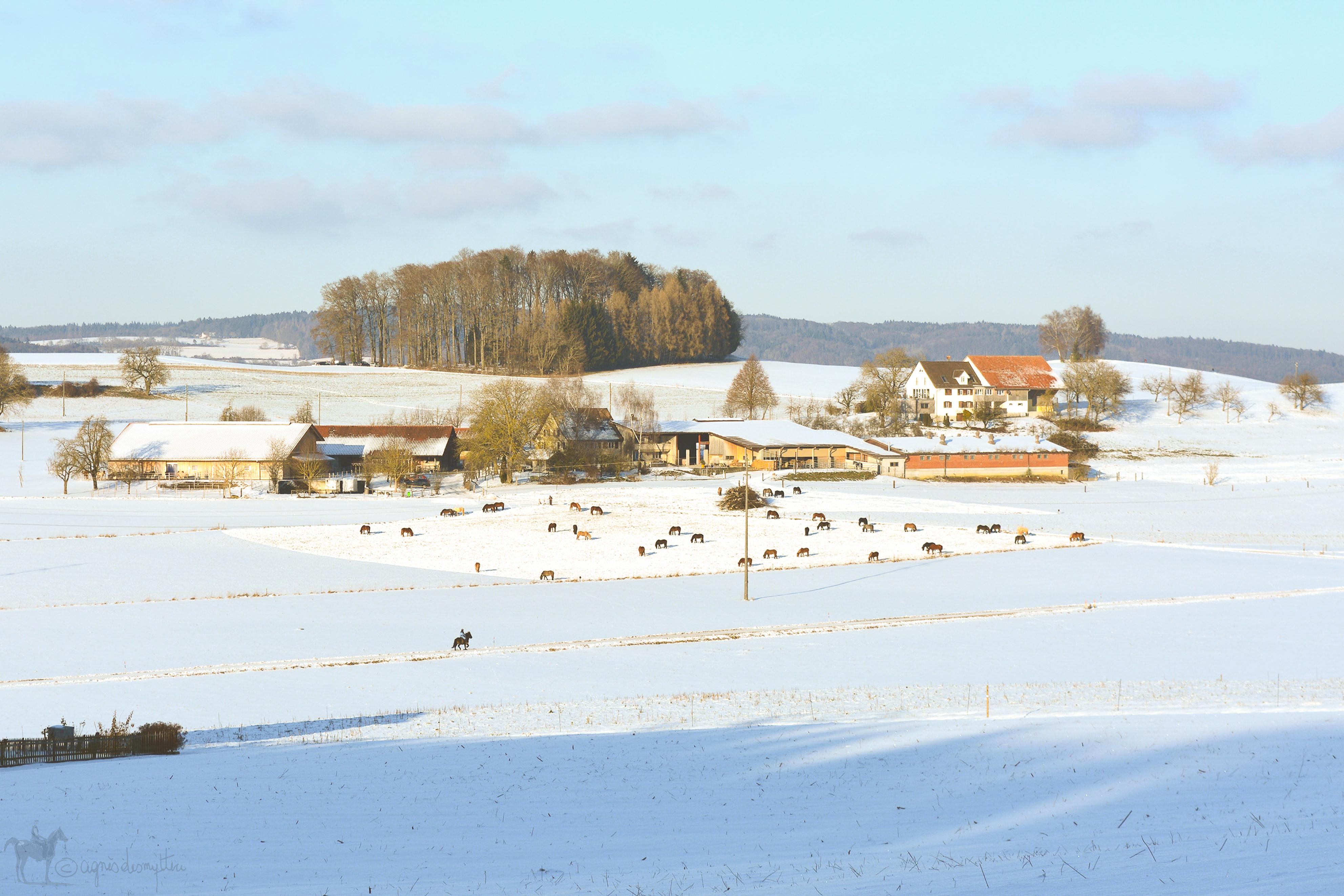 Unser Hof | Weierholz in Winter