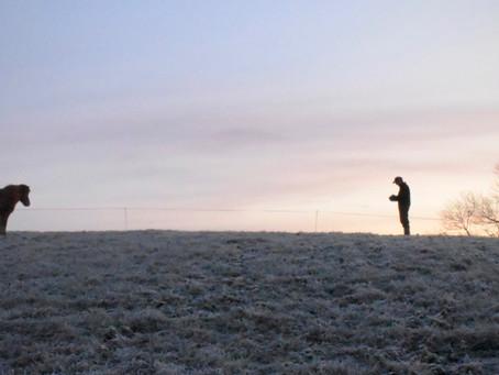 Im Morgengrauen auf der Weide