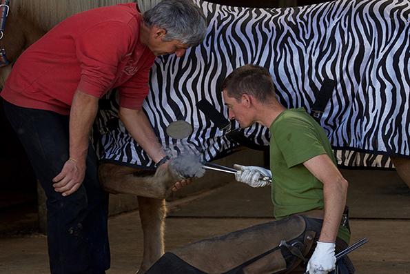 Team @ work | Zebra beschlagen