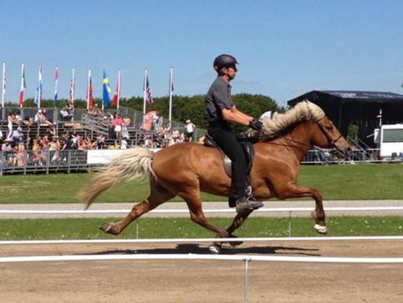 Markus wurde zum Reiter des Jahres 2015 nominiert!