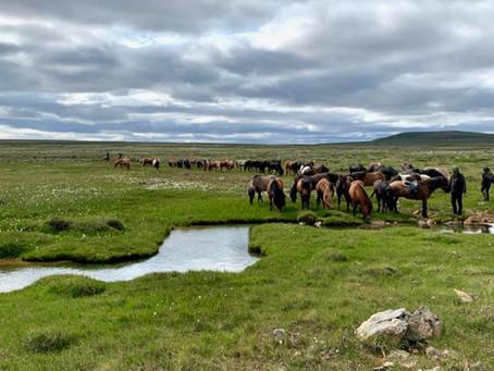 ISLAND Reittour 2021: Impressionen