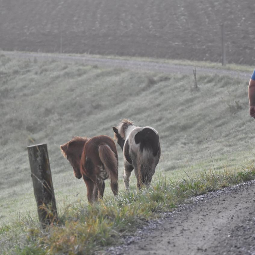 Weide Wechsel für die Fohlen