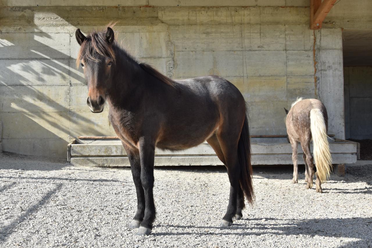 Unser Hof | Jungpferde Stall