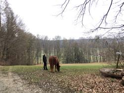 Unser Reitgelände | Wandern