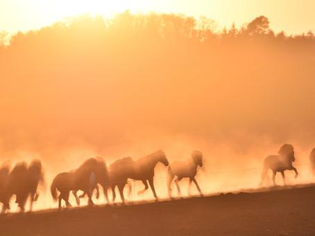Sahara-Stimmung im Thurgau