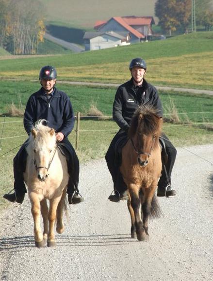 Jungpferde Training 2015