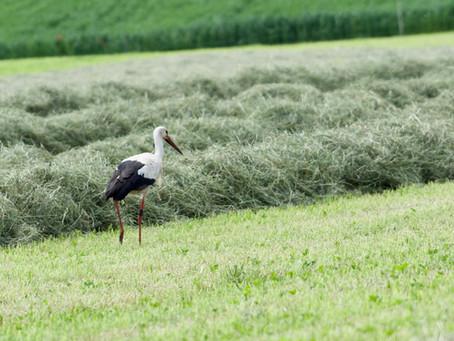 Ein Storch auf Hofinspektion