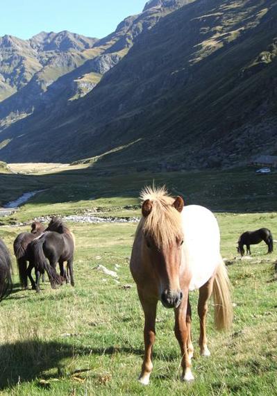Jungpferde auf der Alp