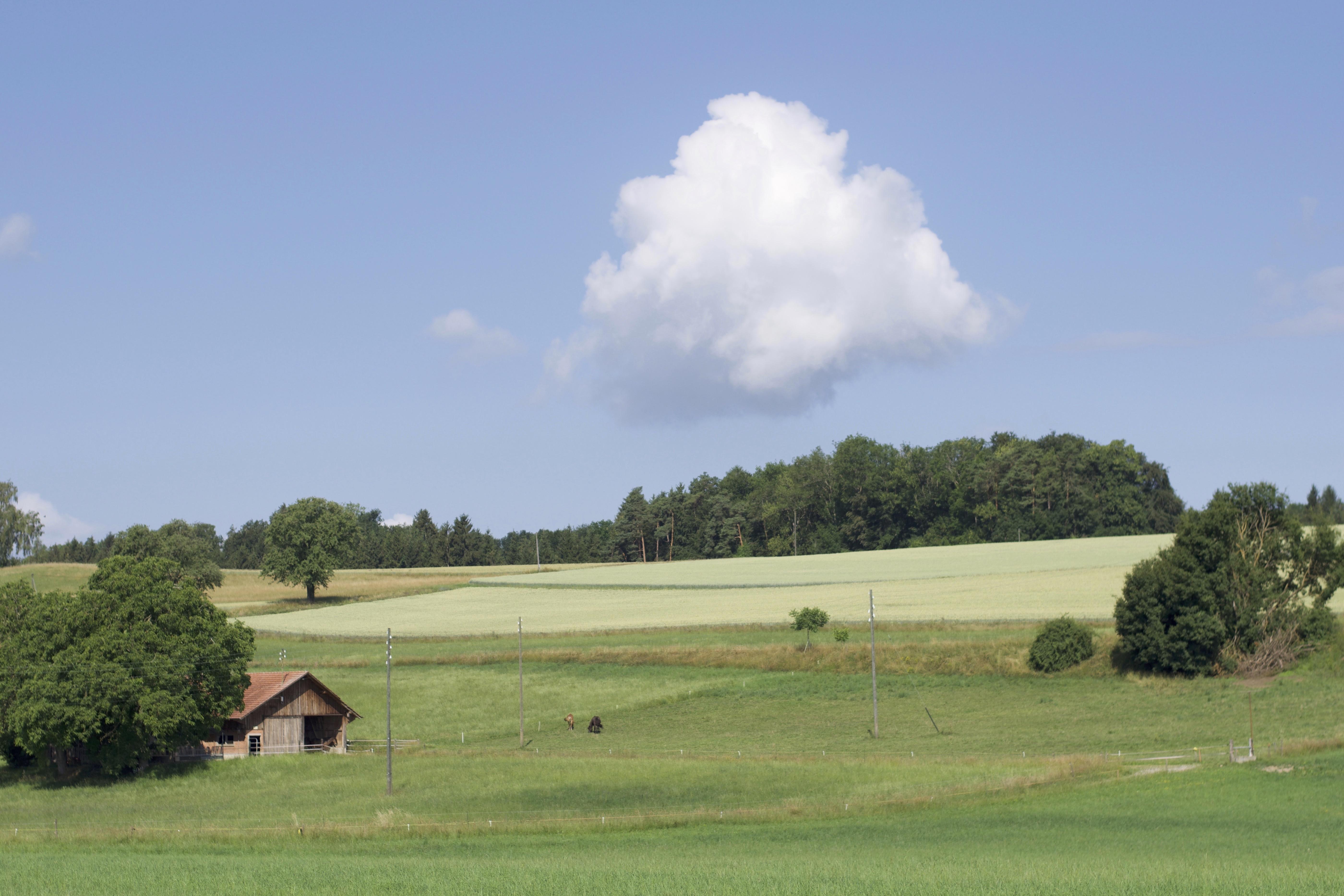 Unser Hof | Schürli im Sommer
