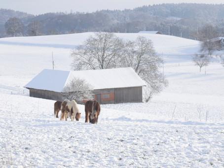 Schnee auf dem Weierholz.
