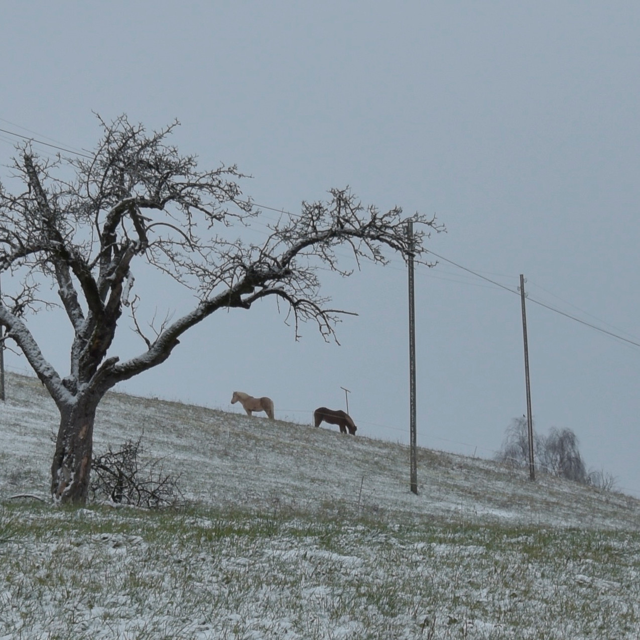 2019-12-13 - Erstes Schnee dieses Winter