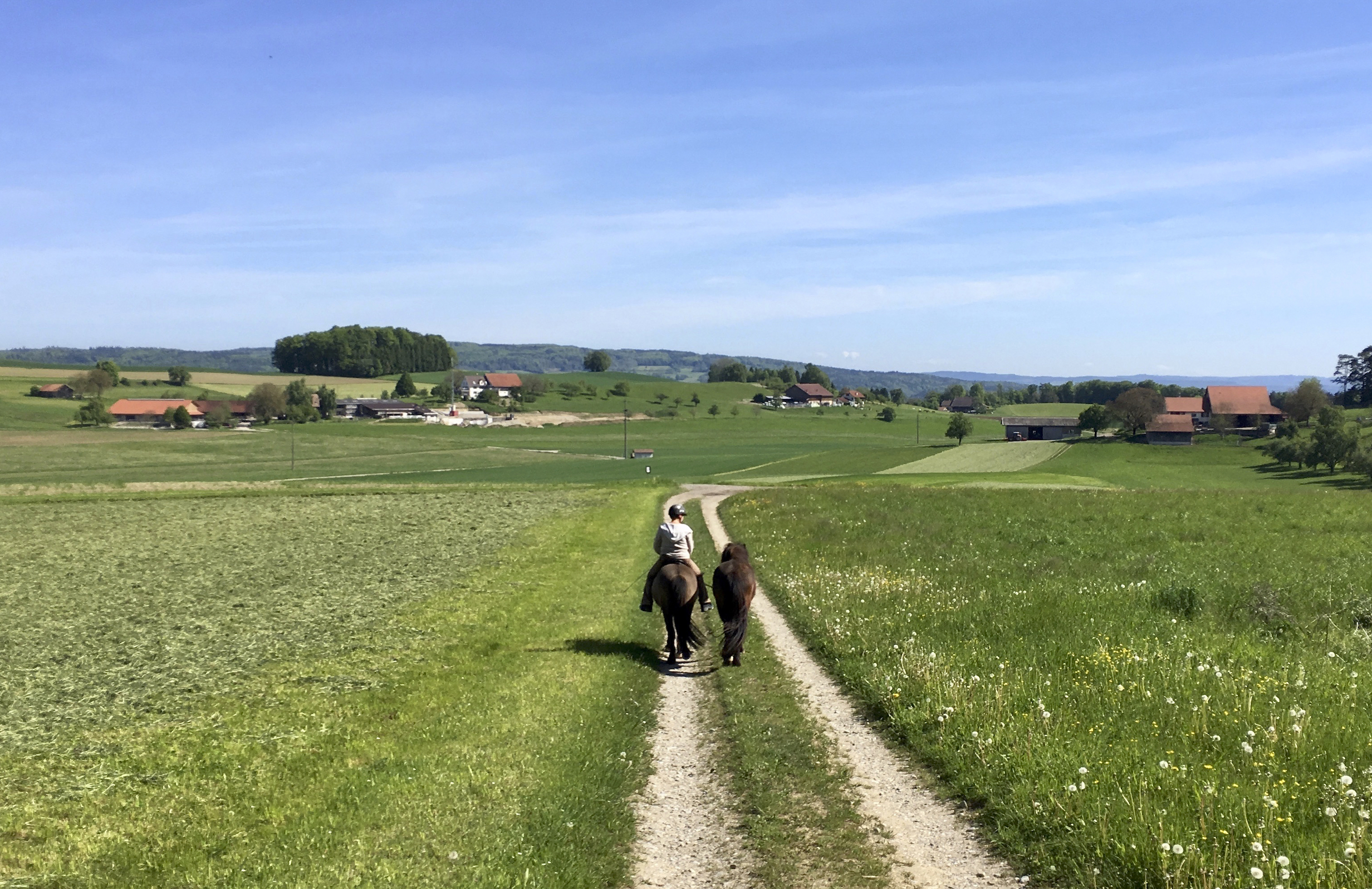 Unser Reitgelände | Hofblick
