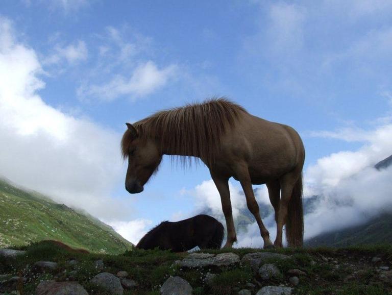 Blog 2012 - Fohlen Alp 1