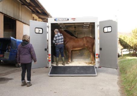 Die neuen Verkaufspferde sind da!