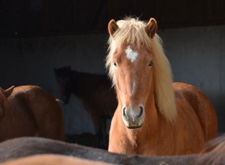 Neues Verkaufspferd