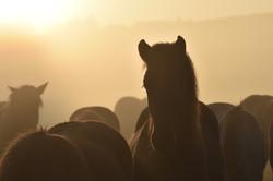 Von jung bis alt | Pferd im Morgenlicht