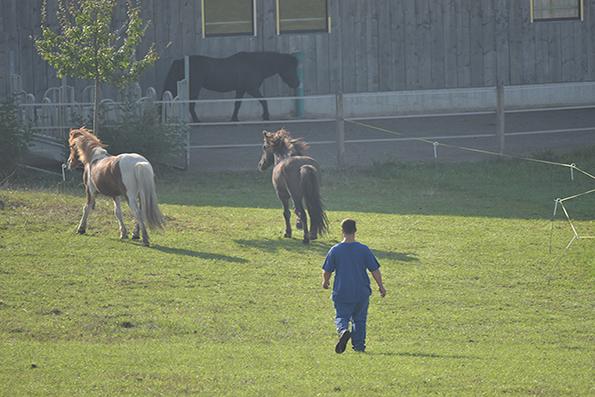 Team @ work | Pferde  sammeln