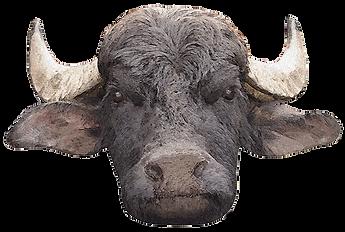 Bufala Farm Eschenz Logo