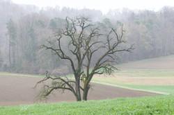 Ums Huus Ume | Wälder