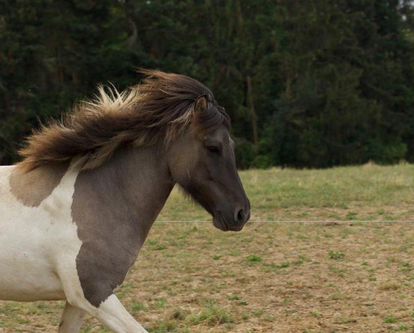 Die Pferde sind aus CH-Zucht und som