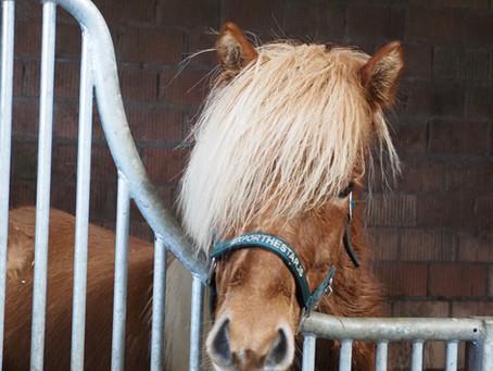 Unsere neuen Verkaufspferde sind da!