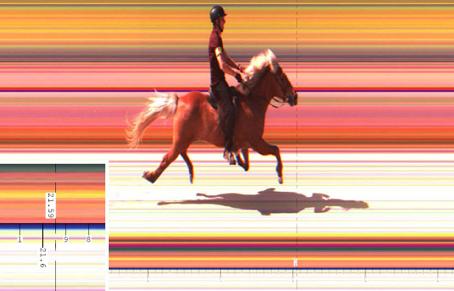 Weltrekord im 250m Passrennen für Markus mit Kóngur!