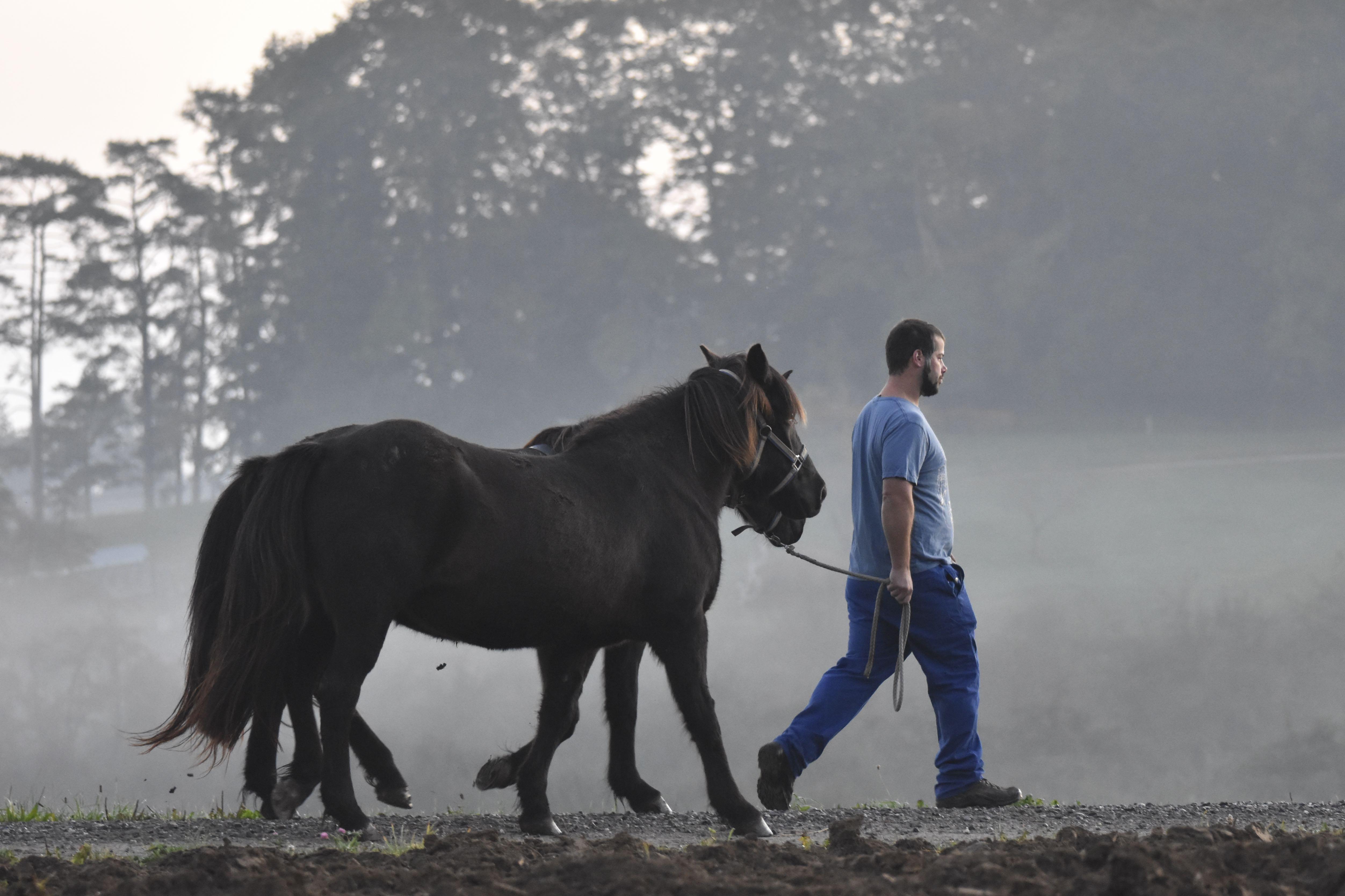 Team @ work | Mit Pferden spazieren