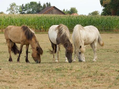 Im Auftrag suchen wir für diese drei hübschen Pferde möglichst rasch ein neues Zuhause:
