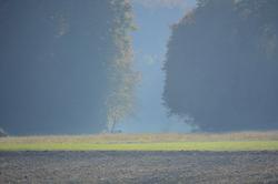 Ums Huus ume | Wald Einladung