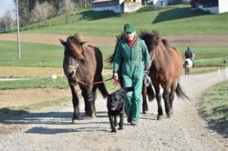 Team @ work | Eyvar & Pferde unterwegs
