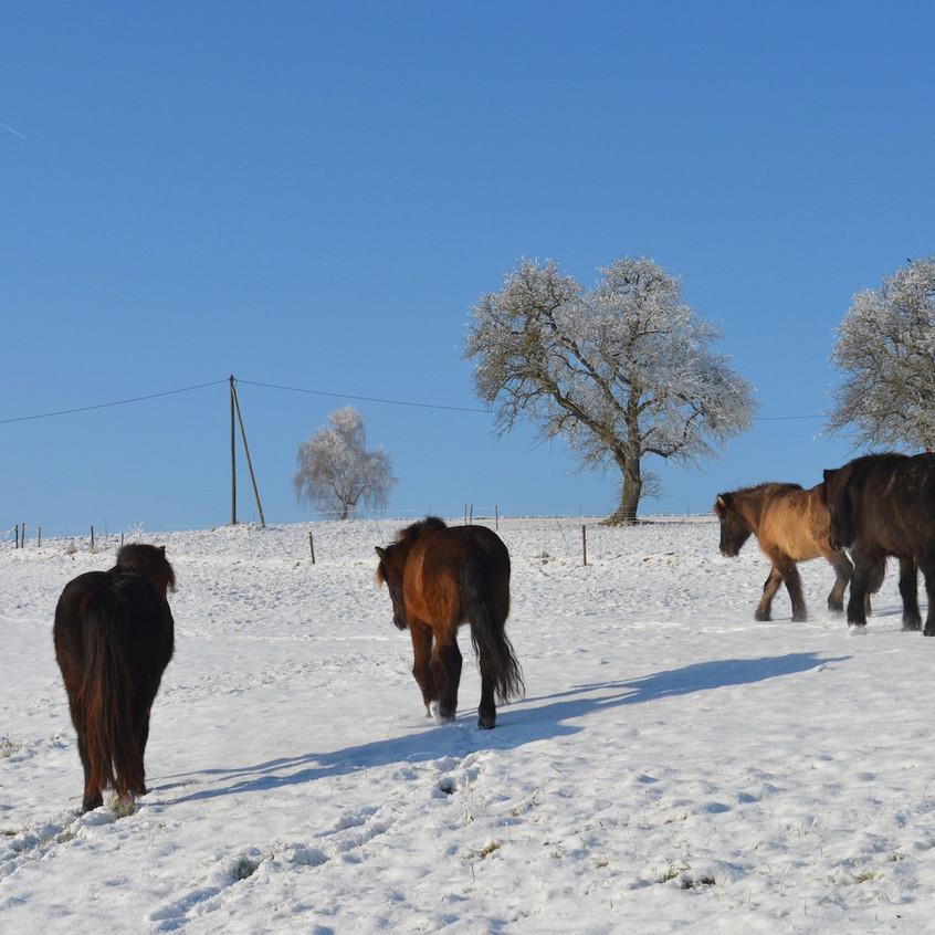 Blog 2017 - First snow 6