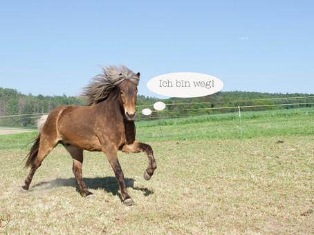 Verkaufte Pferde