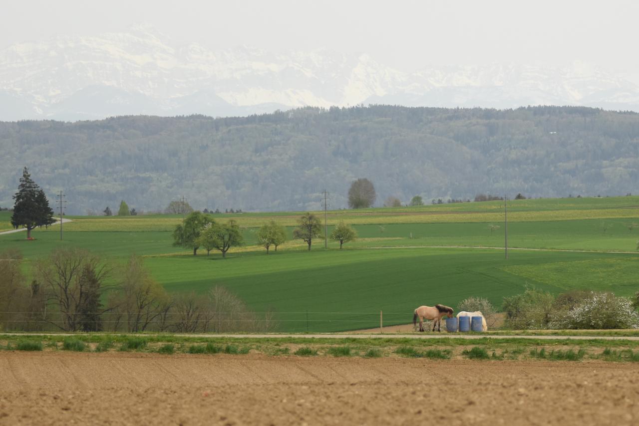 Ums Huus Ume | Land & Berge