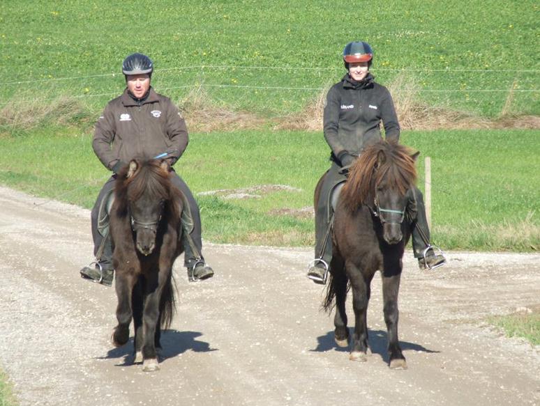 Jungpferde Training 2013