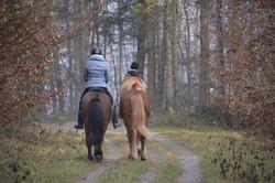 Reiterinnen im Wald