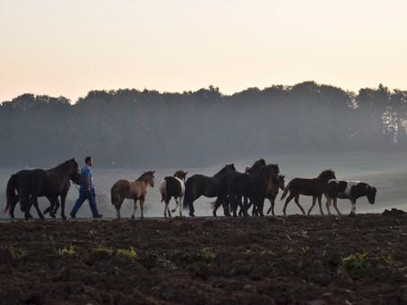 Fohlen-Karawane ins neue Grasparadies