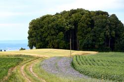 Ums Huus ume | Hochwacht Wald