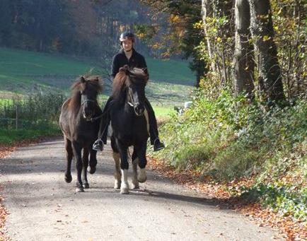 Unsere jungen Pferde machen sich gut!