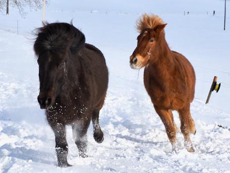 Endloser Spielspass im Schnee der Winterweide!