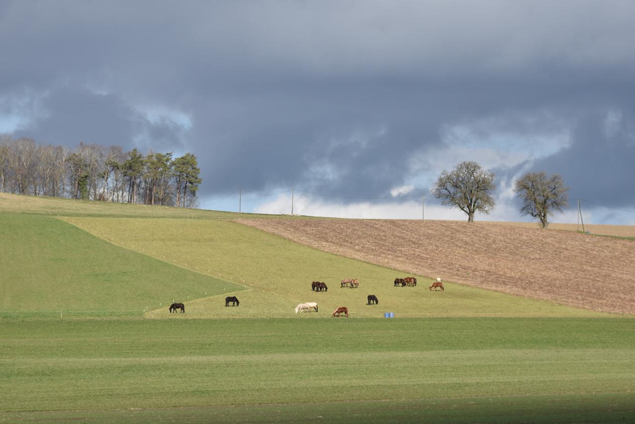 Unser Hof | Winter Weide