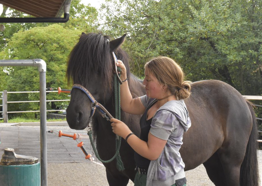 Team @ work | Pferdepflege