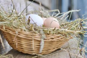 Produkte | Eier
