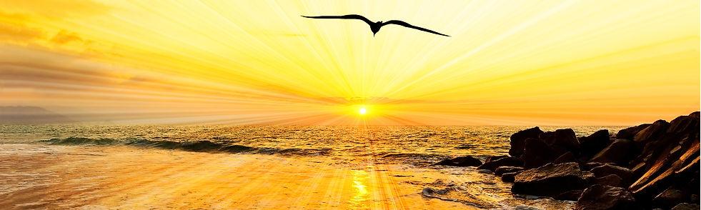 HOME_SunriseBird_15x4.5.jpg