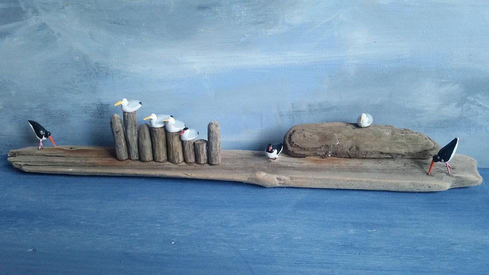 Terns, Gulls and Oystercatchers