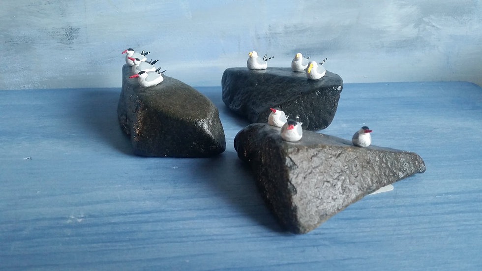 Seabirds on rocks