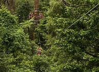 7f975447-Illawarra-Fly-Zip-Line-Discount