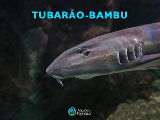Tubarão Bambu